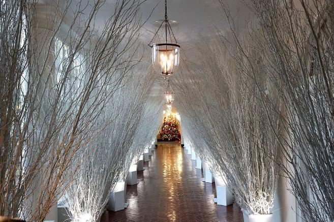 full of white trees