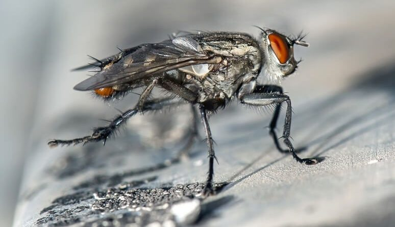get rid of flies at home